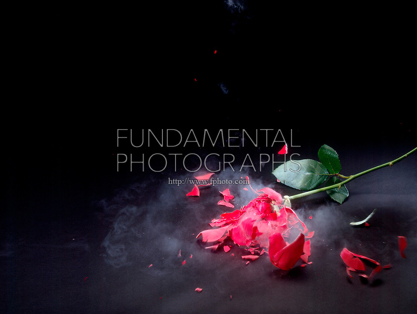 THE CRYOGENIC EFFECT OF LIQUID NITROGEN ON A ROSE (4 of 4)<br /> Shattering The Frozen Rose<br /> A rose which is normally soft and flexible becomes rigid when cooled to 77.3 K above absolute zero as does many materials that are flexible at room temperature.