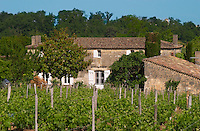A view of The Chateau Letertre Roteboeuf Le Tertre over the vineyard Saint Emilion Bordeaux Gironde Aquitaine France