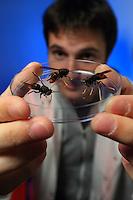 """Antoine Couto, 28 years old, doctoral student at the CNRS (national center for scientific research) of Gif sur Yvette. He studies the behavioral neurophysiology of the Asian hornet and seeks to discover which pheromones induce predatory action in the Asian hornet. That could allow for a sort of """"counterattack"""" by injecting these pheromones into the hornets' nest and thus deregulate their social behavior. The hornets' nest would self-devour itself... ///Antoine Couto, 28 ans, étudiant en doctorat au CNRS de Gif sur Yvette.Il travaille sur la neurophysiologie comportementale du frelon asiatique et cherche à découvrir quelles sont les phéromones induisent une action de prédation chez le frelonasiatique, ce qui peut permettre de trouver une riposte en injectant ces phéromones dans le nid de frelon et déréguler ainsi son comportement social. Le nid de frelon s'autodévorerai…"""