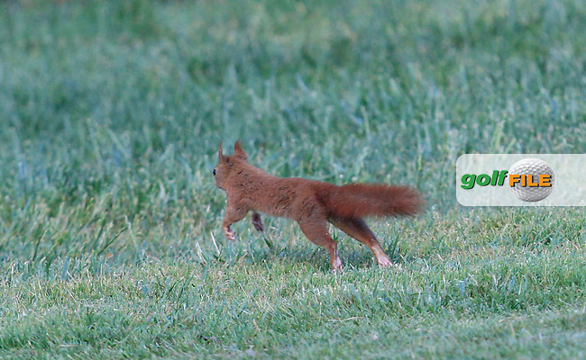 Mr Squirrel runs across the 7th fairway during Round 3 of the Open de Espana  in Club de Golf el Prat, Barcelona on Saturday 16th May 2015.<br /> Picture:  Thos Caffrey / www.golffile.ie