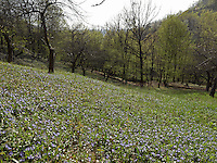 FOREST_LOCATION_90190
