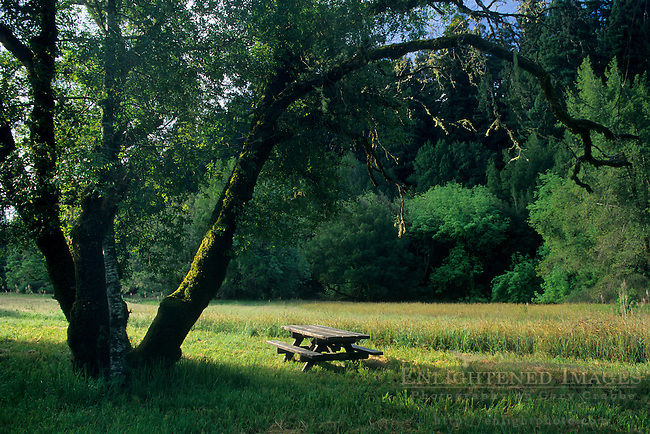 Picnic table under tree in meadow, Hendy Woods State Park, near Philo, Mendocino County, California