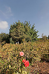 Israel, Wohl Rose Park of Jerusalem