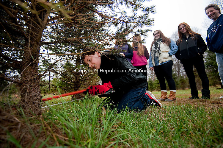 SOUTHBURY, CT--- -112815JS01--With his family looking on, Paul DiMauro, 11, of Oxford, cuts down the family's Christmas tree Saturday at Ragland Farm in Southbury.  <br /> Jim Shannon Republican-American