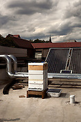 June 6, 2012. Raleigh, NC. Greg Hatem of Sitti keeps 4 hives on the roof of his downtown restaurant.. Several local restaurants have taken to in-house bee keeping and have started to use the fruits of their labor in some of the products they produce.