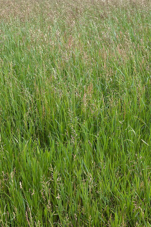 Grassland on Old Mission Peninsula, Lake Michigan, Traverse City area, Michigan, USA