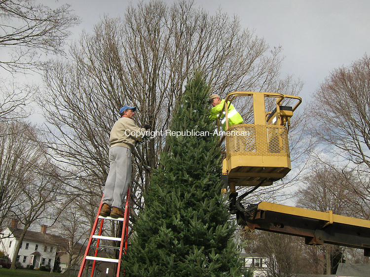 MIDDLEBURY, CT  - 28 November 2011 - 112811MR01 - Public Works employees Jeff Salerno, left, and Kevin Dawes, right, string lights around a new Christmas tree on the Green on Monday. Town officials purchased a new tree after the previous evergreen became diseased and began to die. MATTHEW O'ROURKE / REPUBLICAN-AMERICAN