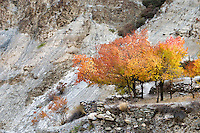 Autumn in Chilling  Village, Hemis National Park,  Jammu and Kashmir, India