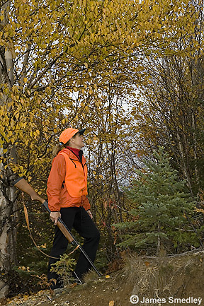 Woman hunting for ruffed grouse