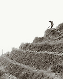 CHINA, Longsheng, farmer ploughs the Dragon Backbone Rice Terraces (B&W)