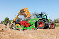Loading the potato planter with seed - Lincolnshire, April