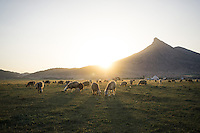 June 27, 2014 - Dash Arzhan (Iran). Sheeps in a nomad settlement outside Dash Arzhan. © Thomas Cristofoletti / Ruom
