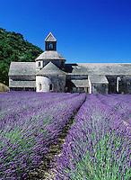 France, Provence, Abbaye de Senanque: Lavender Field | Frankreich, Provence, Abbaye de Senanque: Lavendelfeld