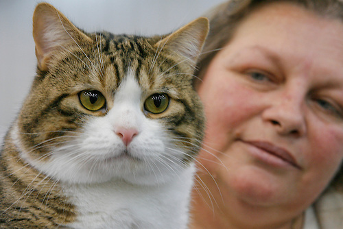 "Sandra Defoe of LaPorte, TX, holds her Manx cat ""Caitria's Duncan O'Toole at The Houston Cat Club's 56th Annual Charity Cat Show at the George R. Brown Convention Center this weekend with more than 384 cats in the competition.  (Sunday, Jan. 6, 2008, in Houston. ( Steve Campbell / Chronicle)"