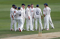 Peter Siddle of Essex celebrates with his team mates after taking the wicket of Will Fraine during Essex CCC vs Yorkshire CCC, Specsavers County Championship Division 1 Cricket at The Cloudfm County Ground on 8th July 2019