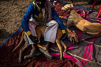 -re-file- FARIDKOT, PUNJAB, INDIA - JANUARY 05, 2016: A trainer pets a greyhound, as they wait in-between races during a greyhound race meet on January 5, 2016 in Faridkot, India. <br /> Daniel Berehulak for The New York Times