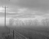 Foggy Morning with Bird, Natimuk Road <br /> Horsham<br /> Vic