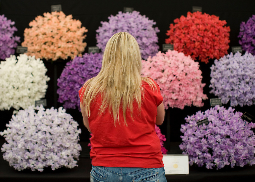 Record crowds descended on the RHS Flower Show at Tatton Park last week as a mini heat wave hit the North West of England. More than 100,000 visitors were expected to have attended the show. One of the climaxes of the week is the rush during the final hour and a half of the show on the last Sunday, when many stalls give away their floral displays to visitors for free.
