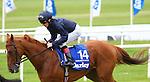 Horse Racing - The Curragh Racecourse - The Darley Irish Oaks. .Remember When - Irish Oaks