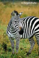 MA38-002z  Zebra - Equus spp.