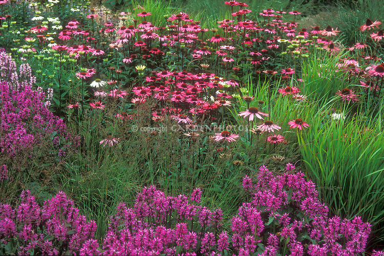 beautiful pink flower garden plant flower stock
