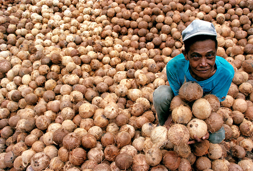 A Coconut farmer and a pile of coconuts ready for copra production, Luzon, Philippines