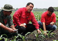 Venezuelan President Hugo Chavez visits a corn plantation run by a socialist initiative in Southern Venezuela