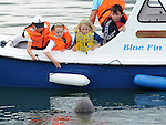 Children look at a seal in the water at the blessing of the fishing boats on Clogherhead pier. Photo: Colin Bell/pressphotos.ie