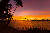 An intense sunset with a purple, orange, and yellow sky silhouetting coconut palm trees at 'Anaeho'omalu Bay, Big Island.