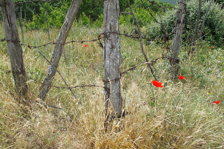 Grass, poppies (Papaver rhoeas)  and barbed wire fence. Stenje region, Lake Macro Prespa (850m) <br /> Galicica National Park, Macedonia, June 2009<br /> Mission: Macedonia, Lake Macro Prespa /  Lake Ohrid, Transnational Park<br /> David Maitland / Wild Wonders of Europe