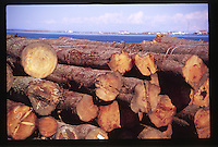 Logging Operations, Port Angeles, Olympic Peninsula, Washington, US