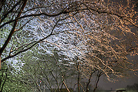Campus Snow Day - tree branches at night<br />
