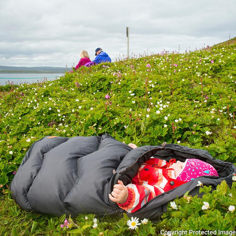 Småbarn sover i voksipose i blomstereng på Hornøya. ---- Child sleaping on Hornøya.