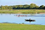 Aviron sur la Loire à Bouchemaine (49).