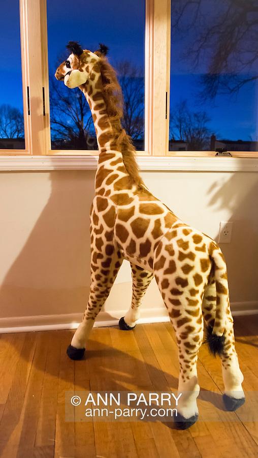 Giraffe Maxie looks out bay window, wondering where friend went.