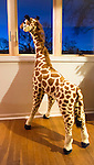 Giraffe Maxie looks out bay window, wondering where friend went.