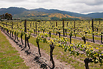 New Zealand South Island, vineyard at Wairau RiverWinery in Marlborough. Photo copyright  Lee Foster.