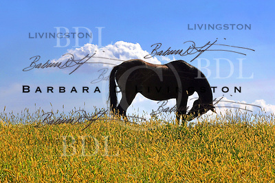 scenic, mood, horse racing, pretty, racehorse, horse, equine, racetrack, track, saratoga