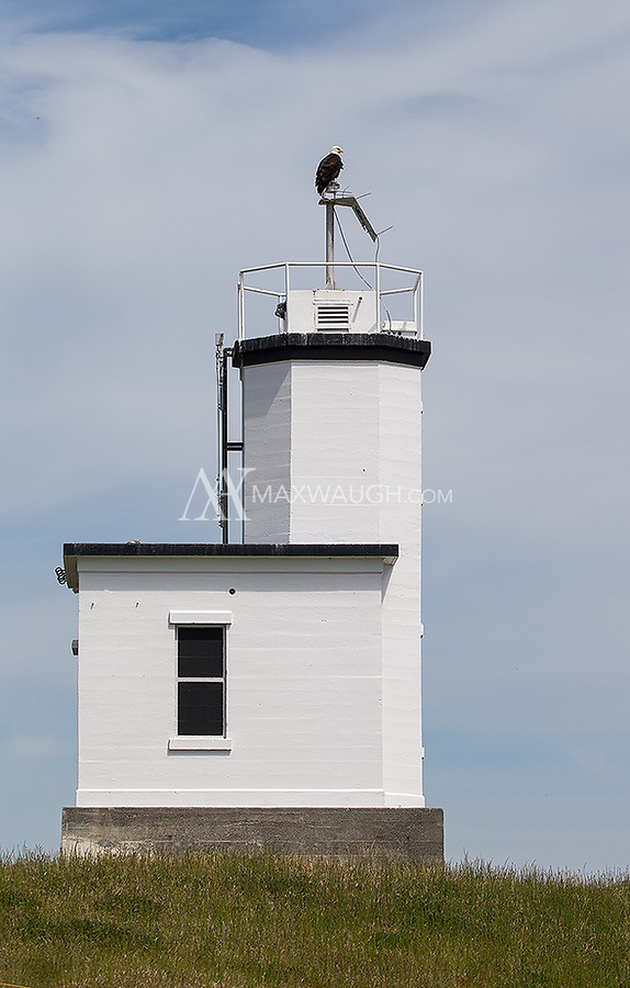 A Bald Eagle perches on the Cattle Point Lighthouse.