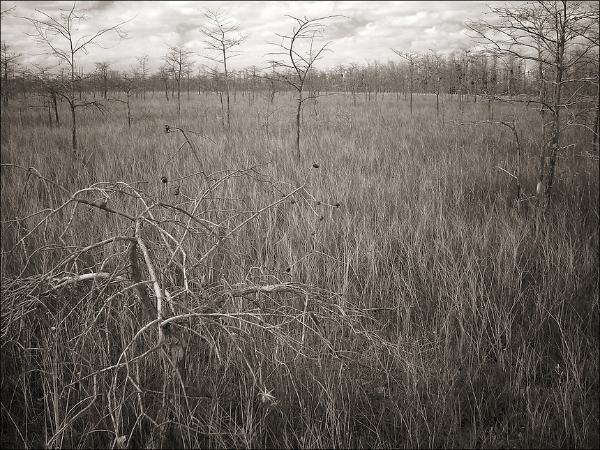 Dry season<br /> From &quot;In the Wild&quot; series. Everglades, Florida, 2005