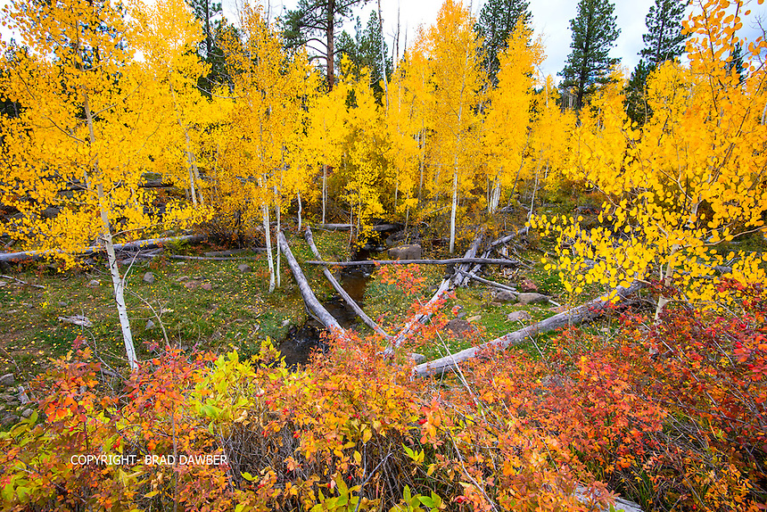 Way off the beaten path up Boulder Mountain , Utah. Love the diverse colors, golden aspens and red berry bushes. 10-9-14