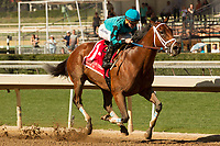ARCADIA, CA  FEBRUARY 3 :  #1 Roy H, ridden by Kent Desormeaux, in the stretch of the Palos Verdes Stakes (Grade ll) on February 3, 2018, at Santa Anita Park in Arcadia, CA.(Photo by Casey Phillips/ Eclipse Sportswire/ Getty Images)