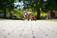 Jak (Bully XXI) on Drill Field sidewalk.<br />