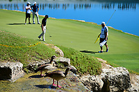 Two ducks watch Zach Johnson (USA) putt from high above the 11th green during round 4 of the World Golf Championships, Dell Technologies Match Play, Austin Country Club, Austin, Texas, USA. 3/25/2017.<br /> Picture: Golffile | Ken Murray<br /> <br /> <br /> All photo usage must carry mandatory copyright credit (&copy; Golffile | Ken Murray)