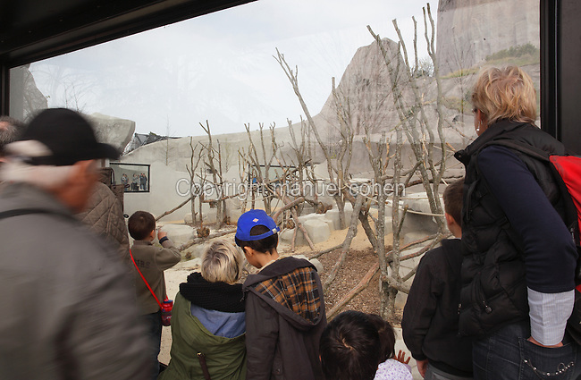 Members of the public viewing the behaviour of Guinea Baboons (Papio papio) including babies in their enclosure, with the Grand Rocher or Great Rock in the background, in the Zone Sahel-Soudan at the new Parc Zoologique de Paris or Zoo de Vincennes, (Zoological Gardens of Paris or Vincennes Zoo), which reopened April 2014, part of the Musee National d'Histoire Naturelle (National Museum of Natural History), 12th arrondissement, Paris, France. Picture by Manuel Cohen