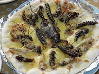 Bug mix pizza contains, Taiwanese water bug, caterpiller moth, big catarpillar, joro spider and larvae at a bug eating party in Tokyo, Japan. The bug eating movement is gaining in popularity in Japan where bug eating gourmet cooking parties are sold-out.  The insects are seen as the ultimate challenge in the world's gastronomical capitol but alo seen as an important alternative source of protein for the future and even the Japanese Space Program is looking into using insects as food in space travel.