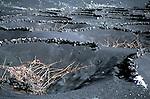 Vineyards on volcanic ashes<br /> <br /> Vi&ntilde;edos sobre cenizas volc&aacute;nicas<br /> <br /> Weinanbau auf Vulkanasche<br /> <br /> 3772 x 2492 px<br /> Original: 35 mm slide transparancy