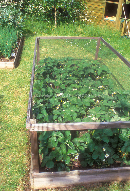 Keeping Critters Away From Garden Plants With Protective Structure For  Strawberries Fragrair, Preventing Animals Such