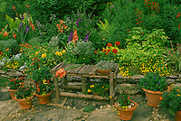 Yellow and orange garden in summer wth gladiolas, zinneas, succulents, chilis, coleus, with hand built bench on flagstone