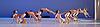 Dutch National Ballet <br /> Hans Van Manen - Master of Dance<br /> Grosse Fuge<br /> rehearsal / photocall<br /> 12th May 2011<br /> at Sadler's Wells. London, Great Britain <br /> <br /> Anu Viheriaranta<br /> Jozef Varga<br /> Anna Tsygankova<br /> Alexander Zhembrovskyy<br /> Igone de Jongh<br /> Matthew Golding <br /> Marisa Lopez<br /> Cedric Ygnace<br /> <br /> <br /> Photograph by Elliott Franks